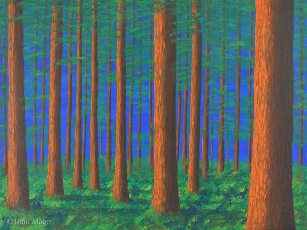 A forest of straight trees in the afternoon sun